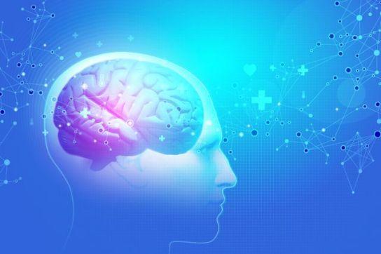 Brain+iStock.com+efks_mid.jpg