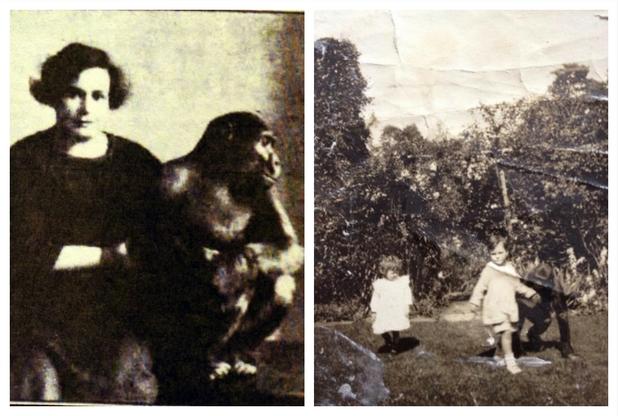 ulsey-gorilla-4