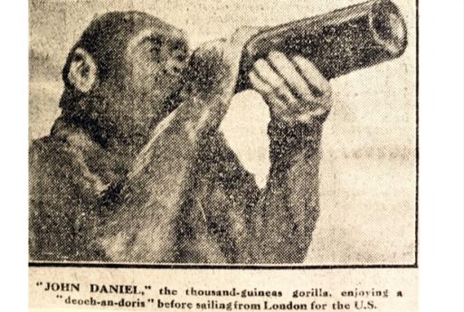 ulsey-gorilla-5