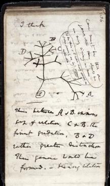 darwin_tree_1837