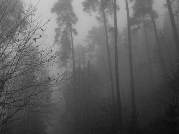 misty_scary_forest_by_undeaddiabla-daitsvi