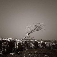 Μενέλαος Λουντέμης: «Τότε που κυνηγούσα τους ανέμους» (απόσπασμα)