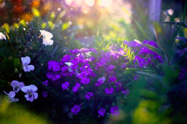 garden_by_kokoszkaa-d65kmqp