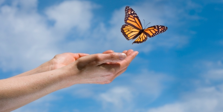 Hands-and-Butterfly-1