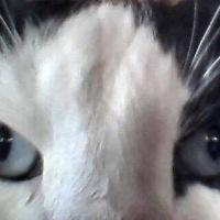 «Ο γάτος»