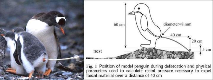 penguin_1487813c